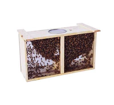 Пчелопакет Бакфаст бессотовый 2019 - фото 4721